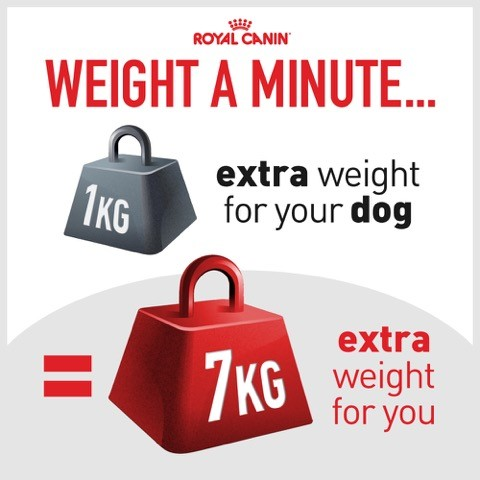 1kg extra weight for your dog equals 7kg extra weight for you